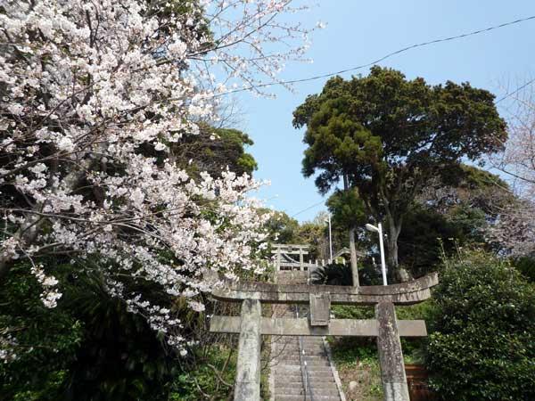 糸島 花見の名所、引津神社