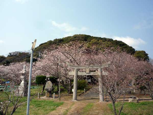 糸島 花見の名所、綿積神社
