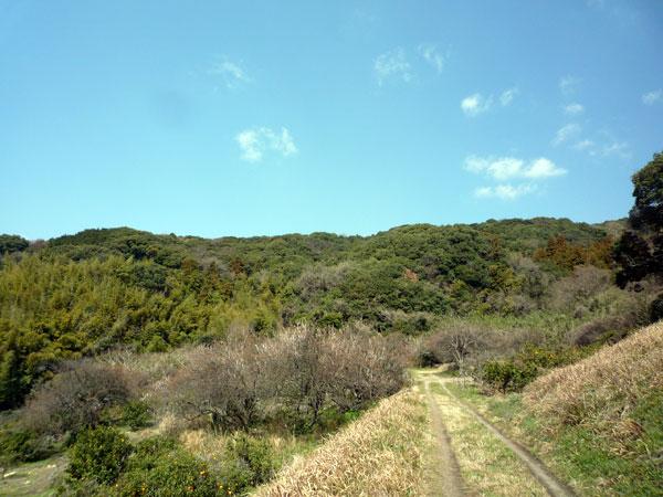 小富士の梅林 景色