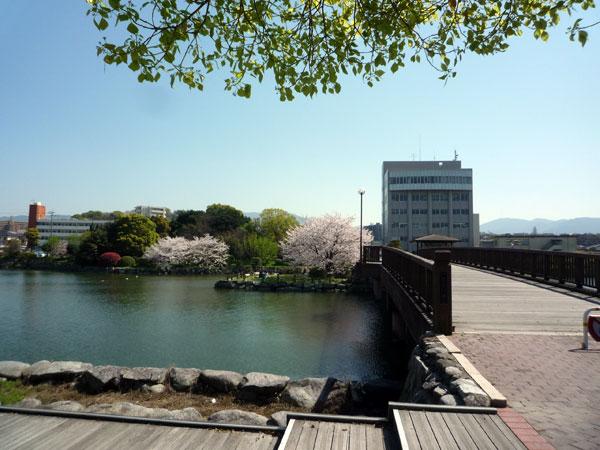 糸島の花見 池田公園の桜